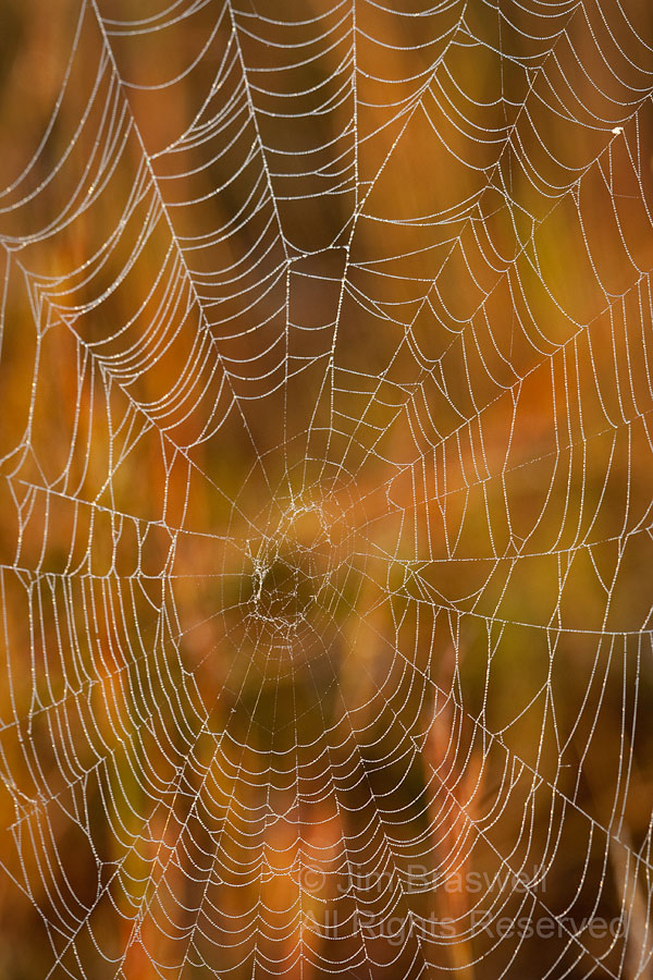 Spider web in fall colors