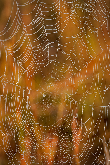 Spider Web in the fall colors
