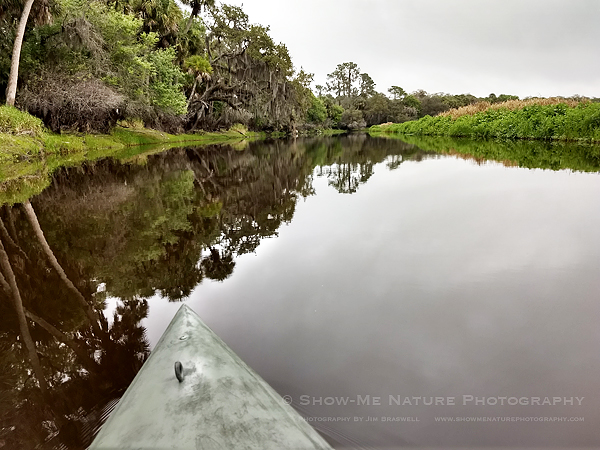 Myakka River view, from kayak