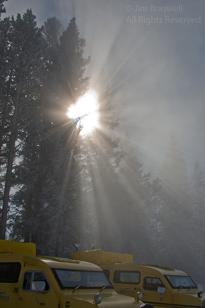 Light filters through the trees at West Thumb (Yellowstone NP)