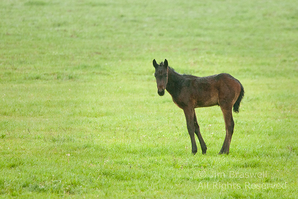 White Sands foal