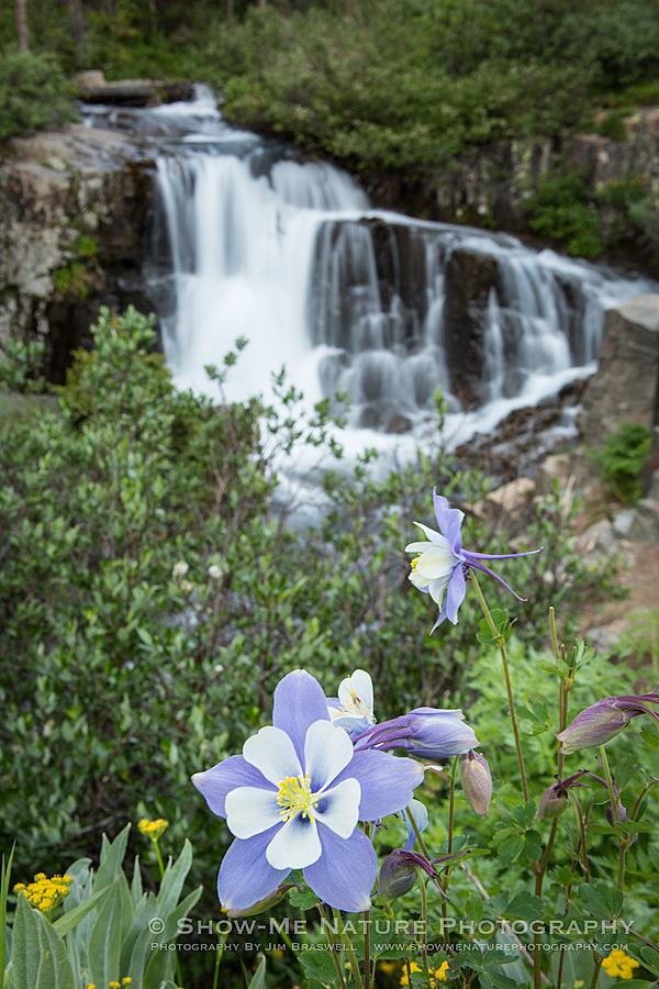 Wildflowers growing near mountain waterfall