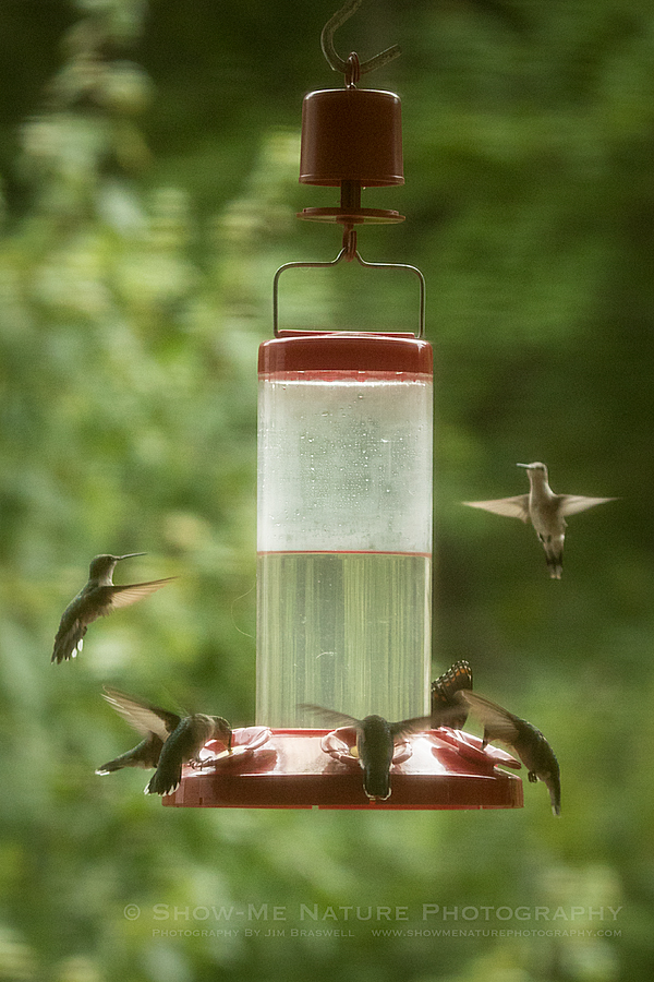 Hummingbirds and Butterfly at feeder