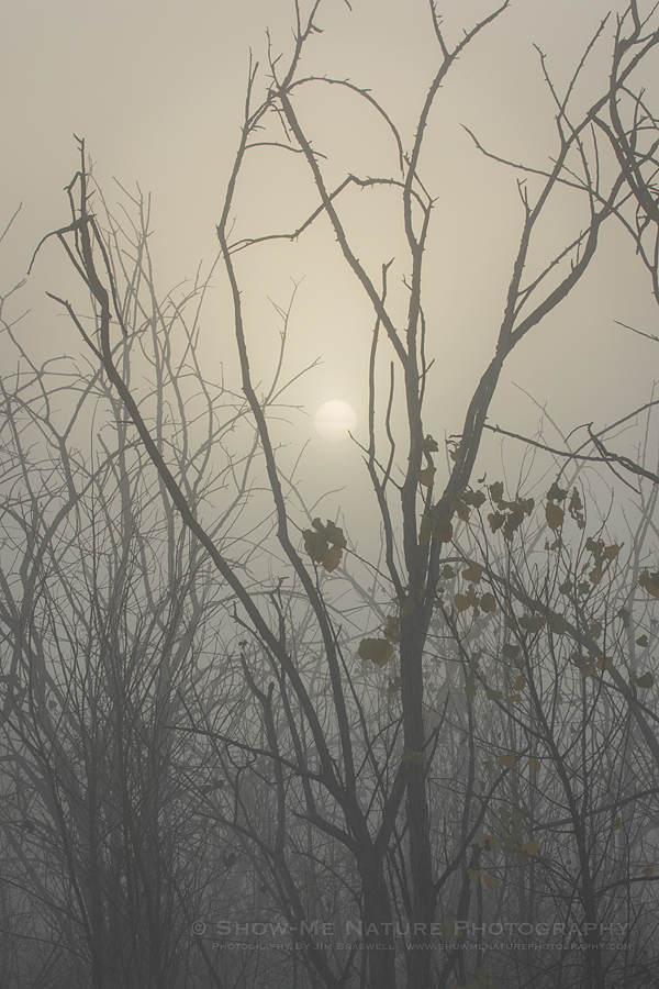 Rising sun through the dense fog