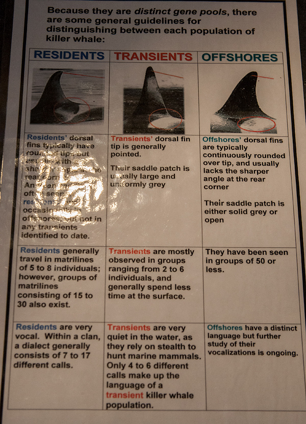 Orca Museum Poster