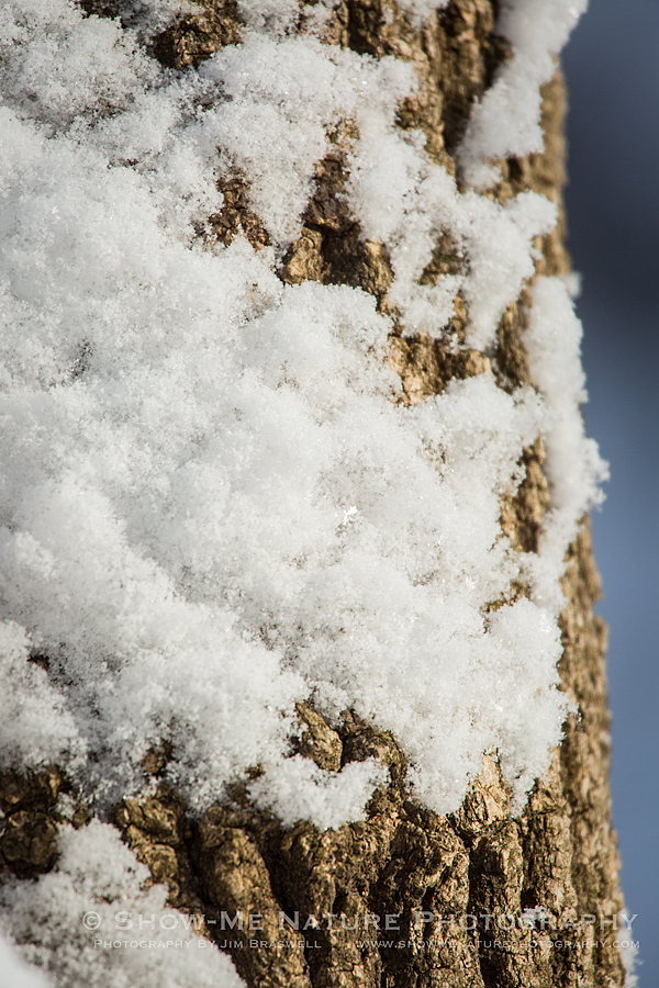 Snow glistedns on a tree trunk