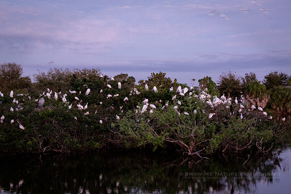 Venice Rookery and Residents, Pre-dawn