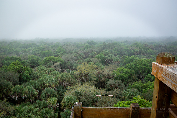 Myakka River State Park, view from the tree-top canopy walk