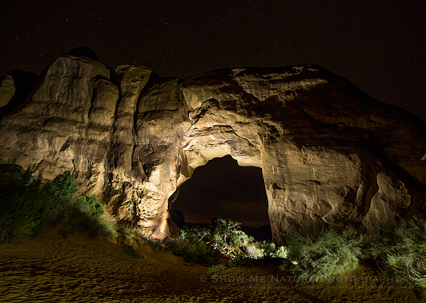 Pine Tree Arch at night