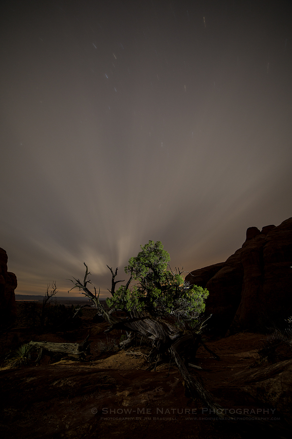 Lone Pine Tree at night
