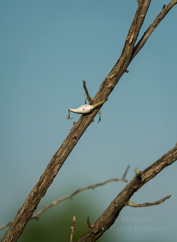Fishing lure in tree