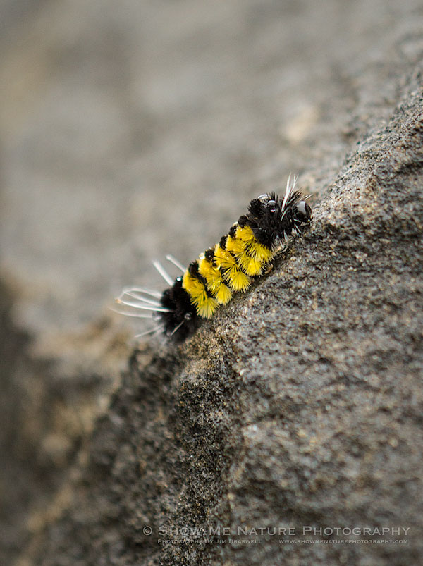 Caterpillar on some rocks