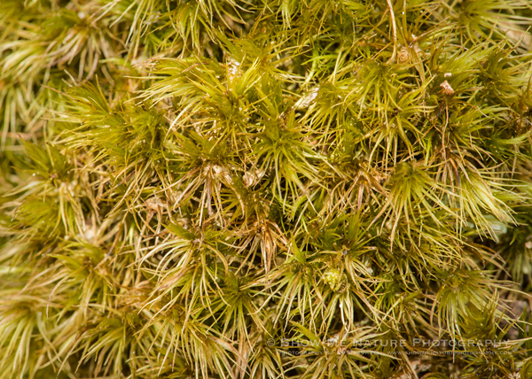 Macro image of Moss on a rock