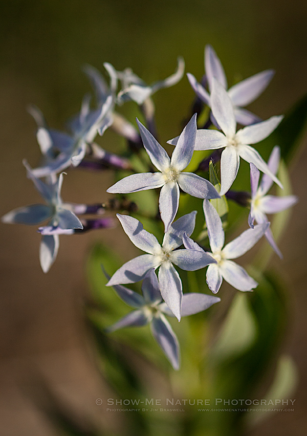 Unidentified star-shaped wildflower