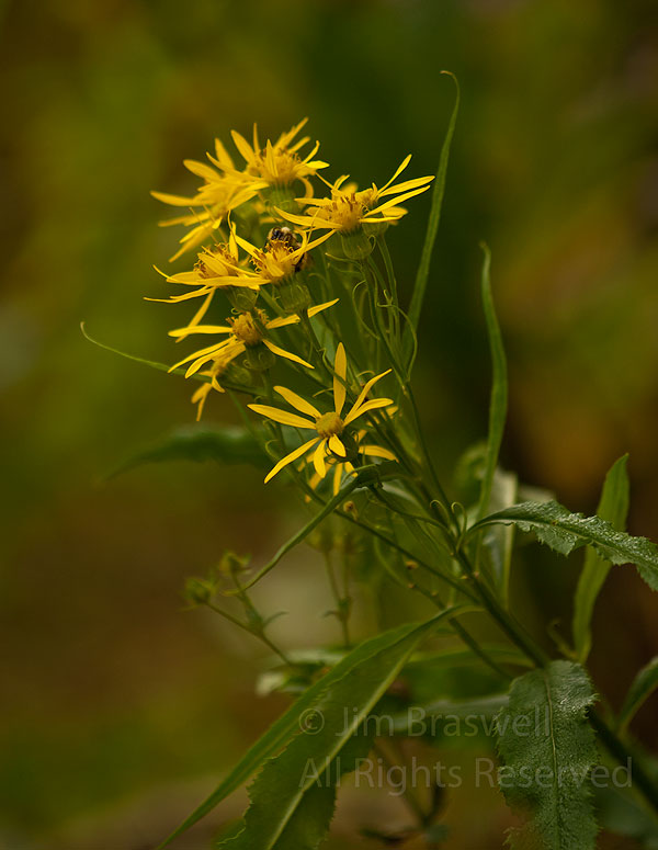 While hiking the Maroon Bells area of the Colorado Rockies, I stumbled upon a small patch of wild...