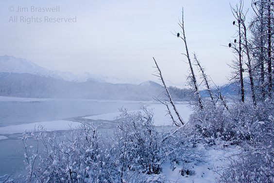 Snowy scene on the Chilkat River